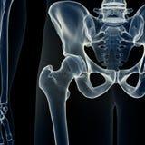 La junta de cadera ilustración del vector