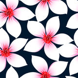 La ketmie tropicale blanche fleurit dans un modèle sans couture Photographie stock libre de droits