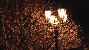 La lámpara de calle amarilla ilumina las ramas de árbol nevadas almacen de video
