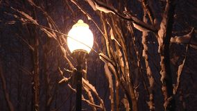 La lámpara de calle amarilla ilumina las ramas nevadas y la nieve que cae almacen de video