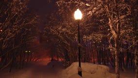 La lámpara de calle en el parque nevoso enciende nieve que cae almacen de metraje de vídeo