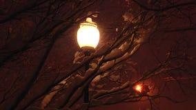 La lámpara redonda de la luz de calle ilumina la nieve que cae y las ramas de los árboles almacen de video
