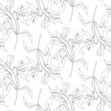 La línea inconsútil del modelo florece alstroemeria Fondo botánico del vector Alstromeria libre illustration