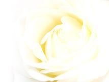La L bianco è aumentato Fotografia Stock Libera da Diritti