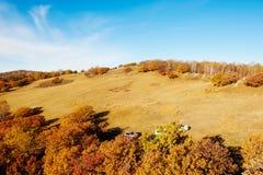 La ladera en el prado Fotografía de archivo libre de regalías