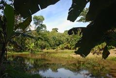La laguna sorrounded di vegetazione Fotografie Stock Libere da Diritti