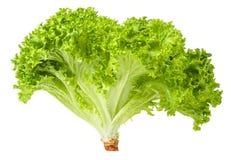 La laitue de salade a isolé Groupe de laitue fraîche verte d'isolement sur le fond blanc photographie stock