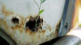 La lama di erba ha germogliato da un foro arrugginito nella parte posteriore di un'automobile bianca pompa stock footage