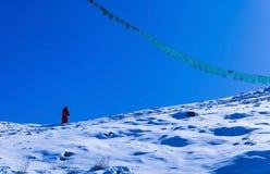 La lama maschio sta camminando su sulla collina della neve immagine stock