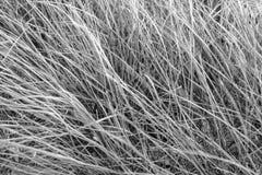 La lame d'herbe en vent Photo stock
