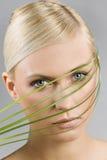 La lame de l'herbe Photographie stock libre de droits