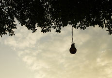 La lampada che appende sotto l'albero nel tramonto immagini stock libere da diritti