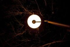 La lampada di via ha acceso i rami degli alberi alla notte Immagini Stock
