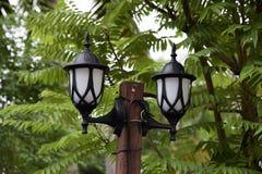 La lampada nella foresta fotografie stock