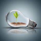 La lampadina con suolo e la pianta verde germogliano interno e la farfalla Fotografie Stock Libere da Diritti