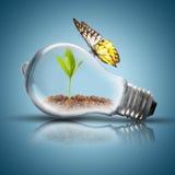 La lampadina con suolo e la pianta verde germogliano interno e la farfalla Immagine Stock