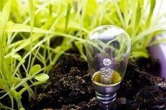 La lampadina si sviluppa con l'erba Immagini Stock