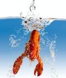La langosta en agua Foto de archivo libre de regalías