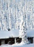 La Laponie Image stock