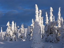 La Laponie Images stock