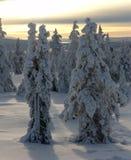 La Laponie Photos libres de droits