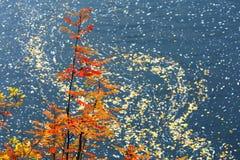 La Laponie dans des couleurs d'automne Image libre de droits
