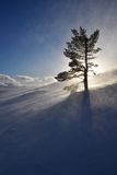 La Laponie magique Images libres de droits