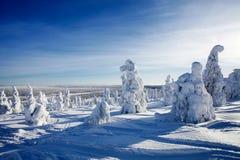 La Lapponia Finlandia Fotografia Stock Libera da Diritti