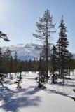La Lapponia, Finlandia Fotografia Stock Libera da Diritti