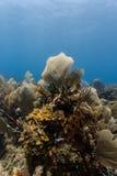 La large variété d'espèce marine s'élevant du petit secteur du récif coralien aiment une peinture immobile de la vie Image stock