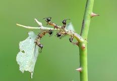 La larva de una polilla Foto de archivo libre de regalías