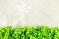 La lattuga fresca lascia il confine sopra calcestruzzo grigio fotografia stock