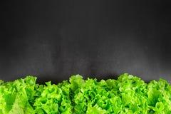 La lattuga fresca lascia il confine sopra il bordo del nero del gesso Fotografia Stock Libera da Diritti