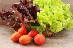 La lattuga, i pomodori ed i peperoni sono disposti insieme in una ciotola sulla a Immagini Stock