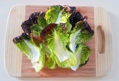 La lattuga rossa e verde, ingredienti alimentari, ortaggi freschi Fotografia Stock Libera da Diritti
