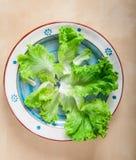 La lattuga verde fresca lascia a disposizione il piatto dipinto di terracotta fotografia stock libera da diritti