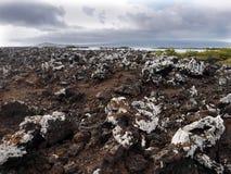 La lava farcita sull'isola Islote Tintoreras commemora l'allunaggio, Galapagos, Ecuador Immagini Stock