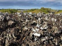 La lava farcita sull'isola Islote Tintoreras commemora l'allunaggio, Galapagos, Ecuador Immagini Stock Libere da Diritti