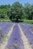 La lavanda coloca Provence Francia Fotos de archivo libres de regalías