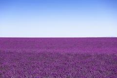 La lavanda fiorisce l'orizzonte di fioritura del campo come fondo, modello o Fotografia Stock