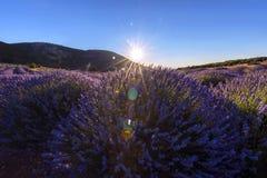 La lavanda florece en Kuyucak, Isparta, Turquía Luz del sol en el ce Fotografía de archivo