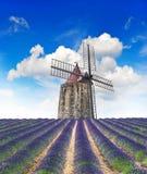 La lavanda floreciente coloca con el molino de viento y el cielo azul hermoso Imagen de archivo libre de regalías