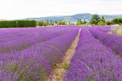 La lavande met en place près de Valensole en Provence, France Images stock