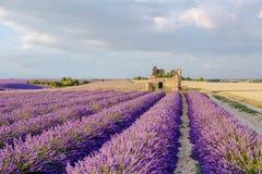La lavande met en place près de Valensole en Provence, France sur le coucher du soleil Photo stock