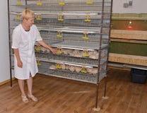 La lavoratrice agricola sta vicino ad una gabbia con le quaglie Fotografie Stock