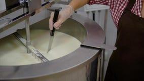 La lavoratrice di latteria sta tagliando la massa del formaggio in una grande ciotola del metallo dopo le fermentazioni, facendo  video d archivio