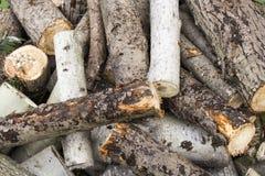 La legna da ardere ha preparato per il camino e la caldaia, legna da ardere in camino Immagini Stock