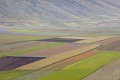 La lenticchia che fiorisce in Castelluccio di Norcia Migliaia di colori Immagini Stock