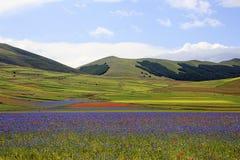 La lenticchia che fiorisce in Castelluccio di Norcia Migliaia di colori Immagine Stock Libera da Diritti