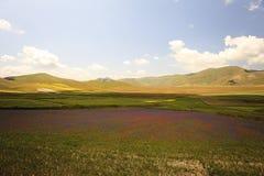 La lenticchia che fiorisce in Castelluccio di Norcia Migliaia di colori Fotografie Stock